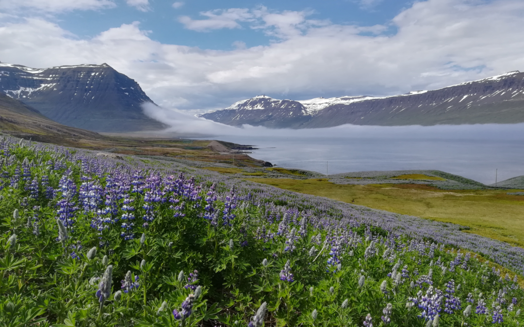 Things You Might Not Know About Iceland – Series 2